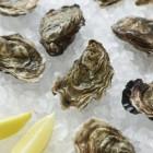 Zwanger en oesters