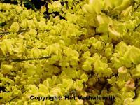 Bloemenquiz bij dementie prikkelt zintuigen en geheugen for Tuinbladen nl