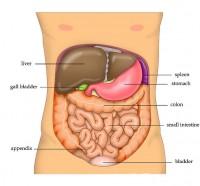 Leveraandoeningen Symptomen Oorzaken En Behandeling Mens En