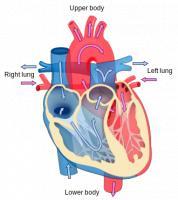 Hoge Bloeddruk Symptomen Oorzaken Gevolgen En Behandeling Mens
