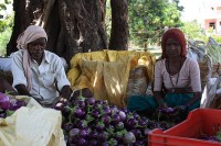 Verkoop van aubergine in India  / Bron: Arne Hückelheim, Wikimedia Commons (CC BY-SA-3.0)