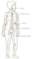 lymfeklieren kanker symptomen