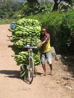 Bananentransport in Tanzania / Bron: Sanderflight, Wikimedia Commons (Publiek domein)