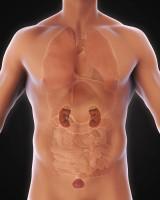 Nierpijn Oorzaken Pijn Aan De Nieren Nierstreek En Rugpijn Mens