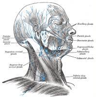 pijn achter oor en nek