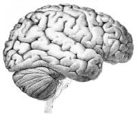 glucose tekort hersenen