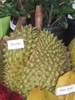 Durian / Bron: Publiek domein, Wikimedia Commons (PD)